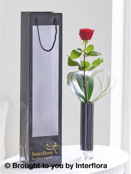 Single Red Rose & Gift Bag